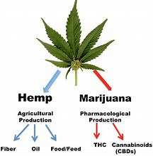Benefits of Hemp in {bc}, B.C.