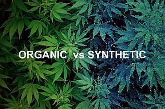 Orgainic vs Synthetic Hemp