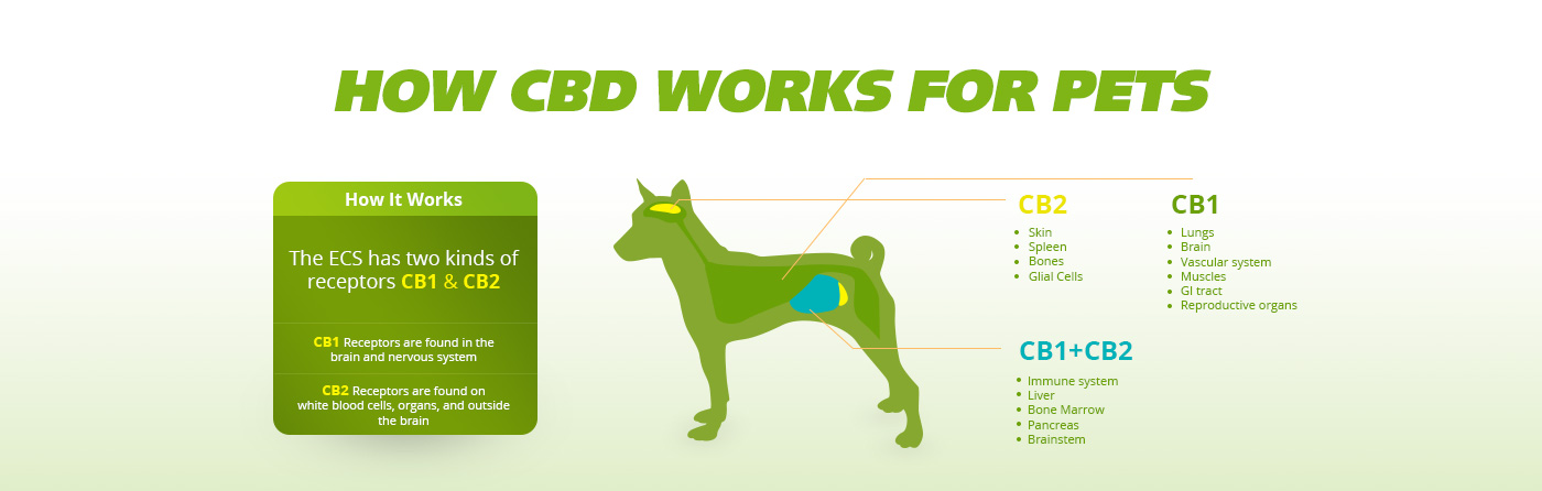 How Cbd Works for Pets in {california}, California