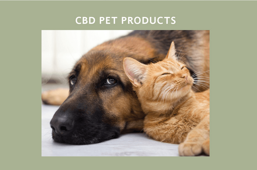 Cbd for Pets in Wilmington